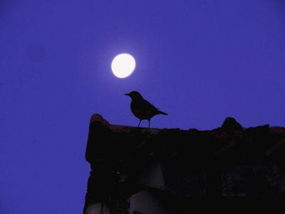 thrush and night sky