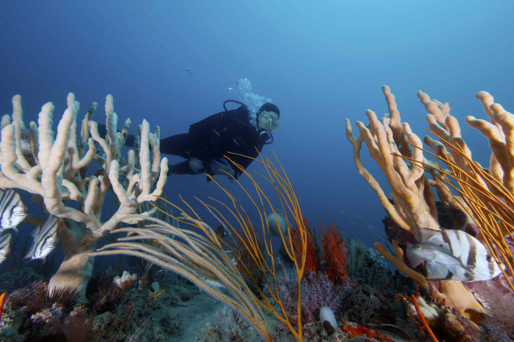 A diver takes in the ocean wilderness at Gray's Reef National Marine Sanctuary off the Georgia coast
