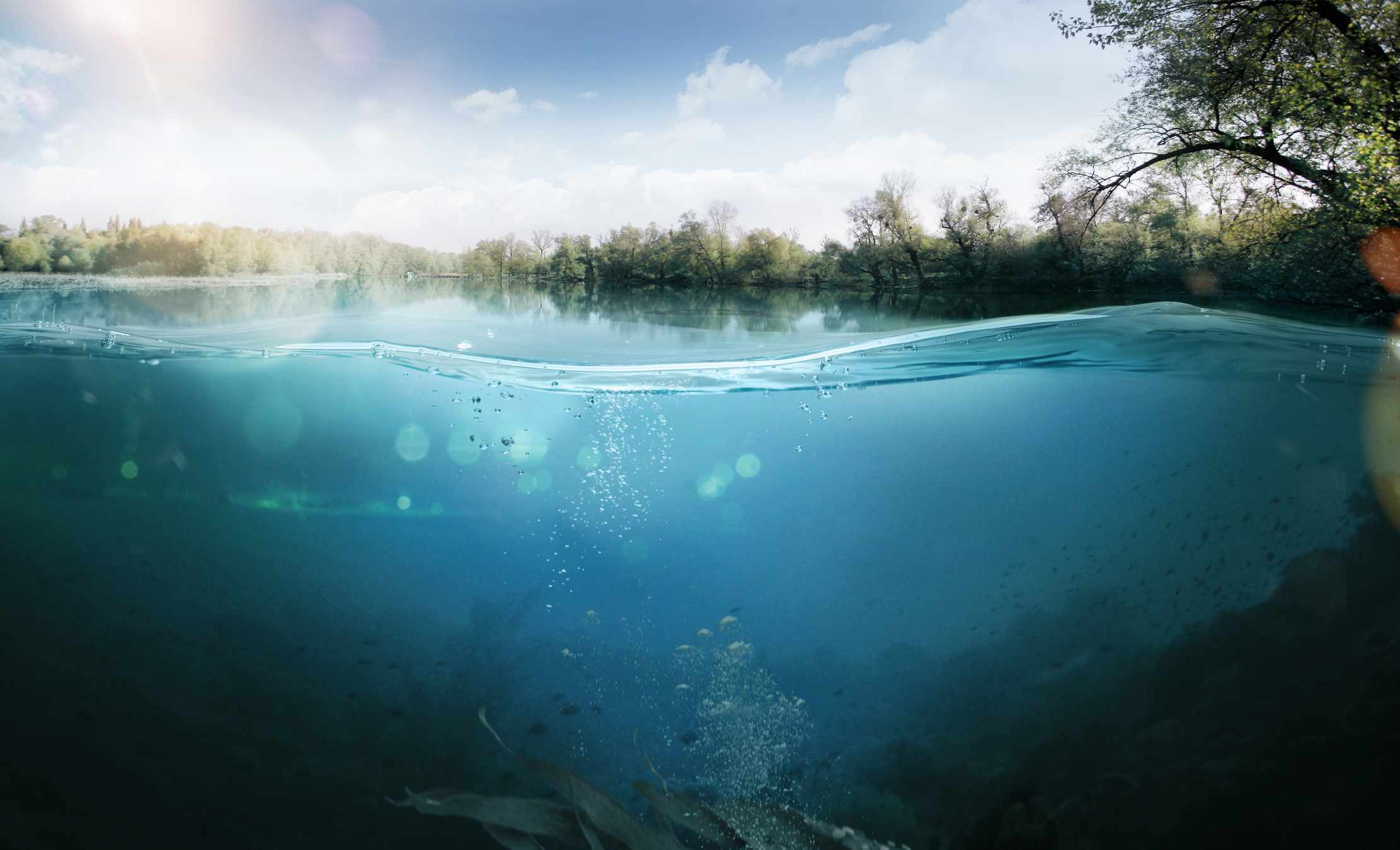Half underwater half over split shot of a lake.