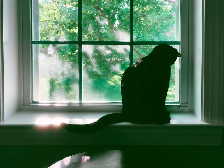 black cat sits at windowsill looking out