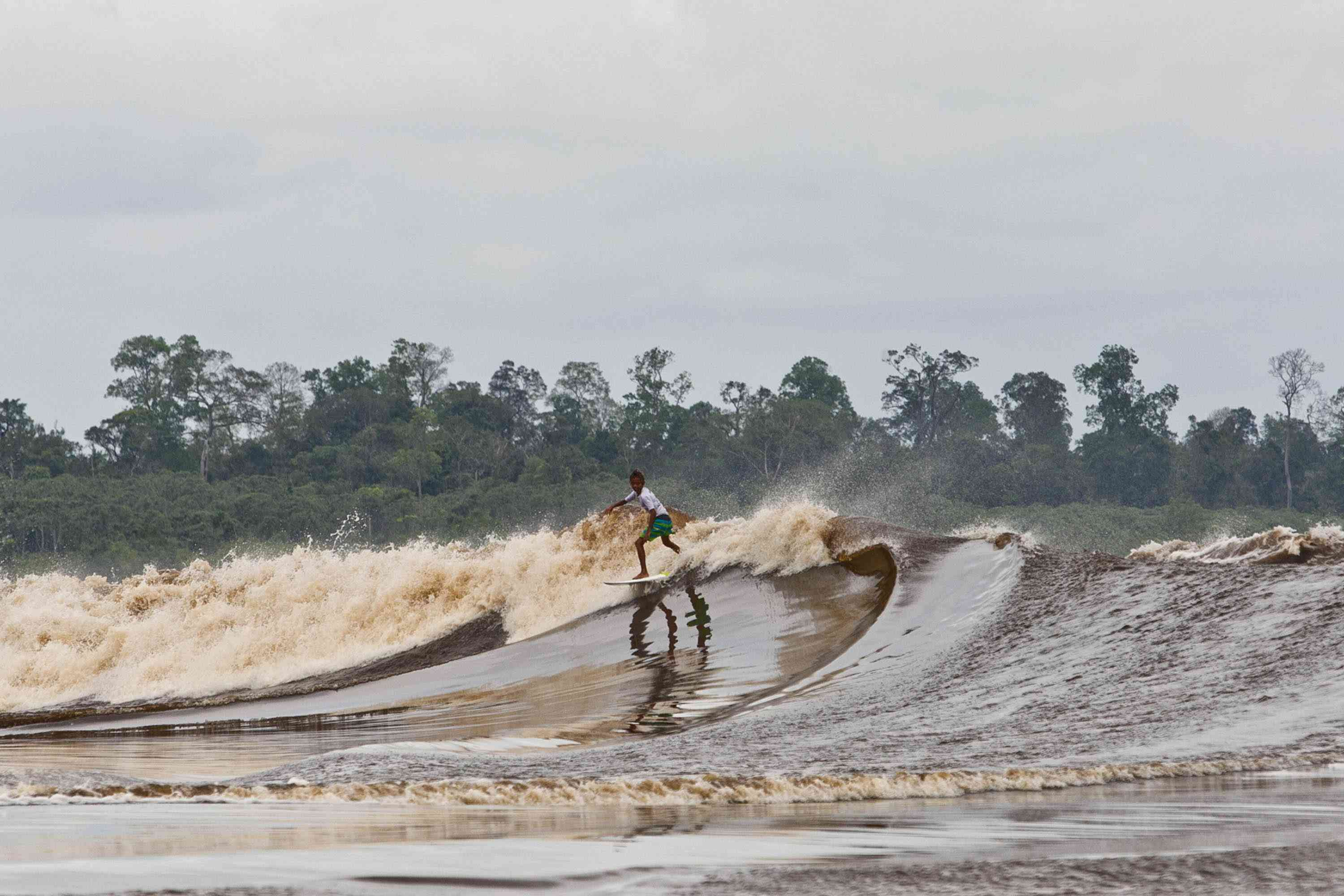 Surfer riding 'Bono' Tidal Wave Of The Kampar River with a forest of tall, green trees in the background and cloudy skies above