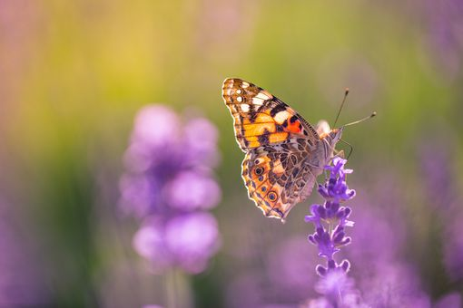 Summer nature view of a beautiful butterfly with colorful meadow.