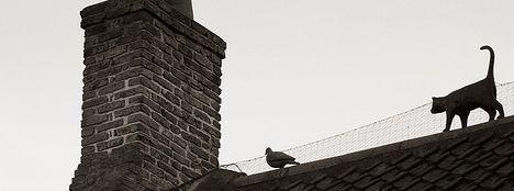 Gatos más letales para los pájaros que las turbinas eólicas