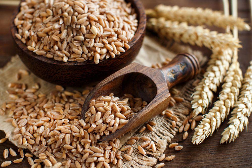 spelt grains