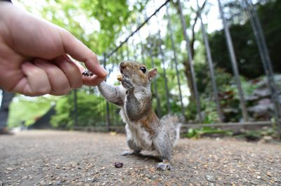 Squirrel shaking hands with a person