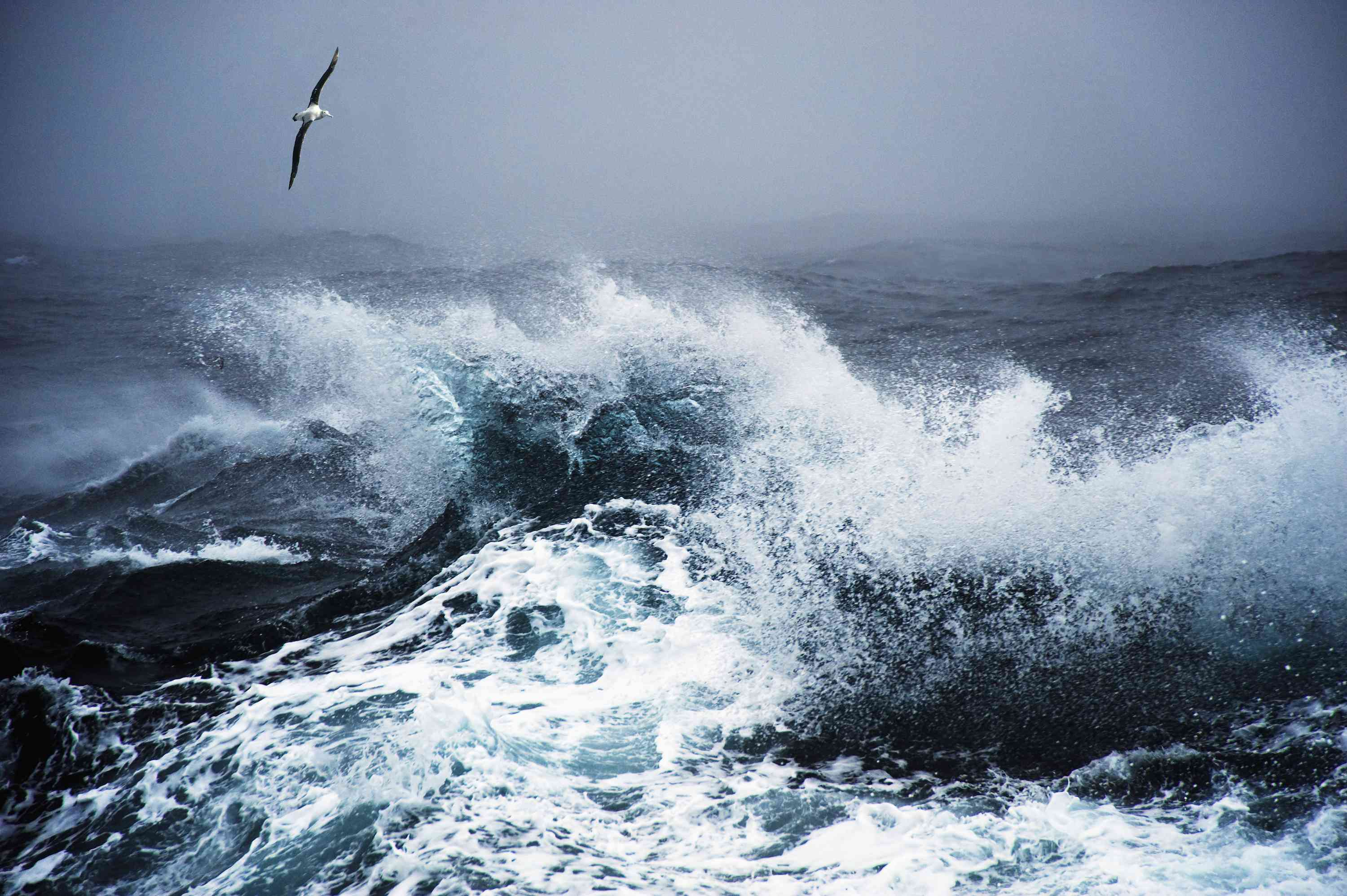 A wandering albatross flies over roughs seas at Drakes Passage in the southern Atlantic Ocean.