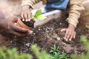 Close up view of African-American father and daughter planting potted plant at plant nursery