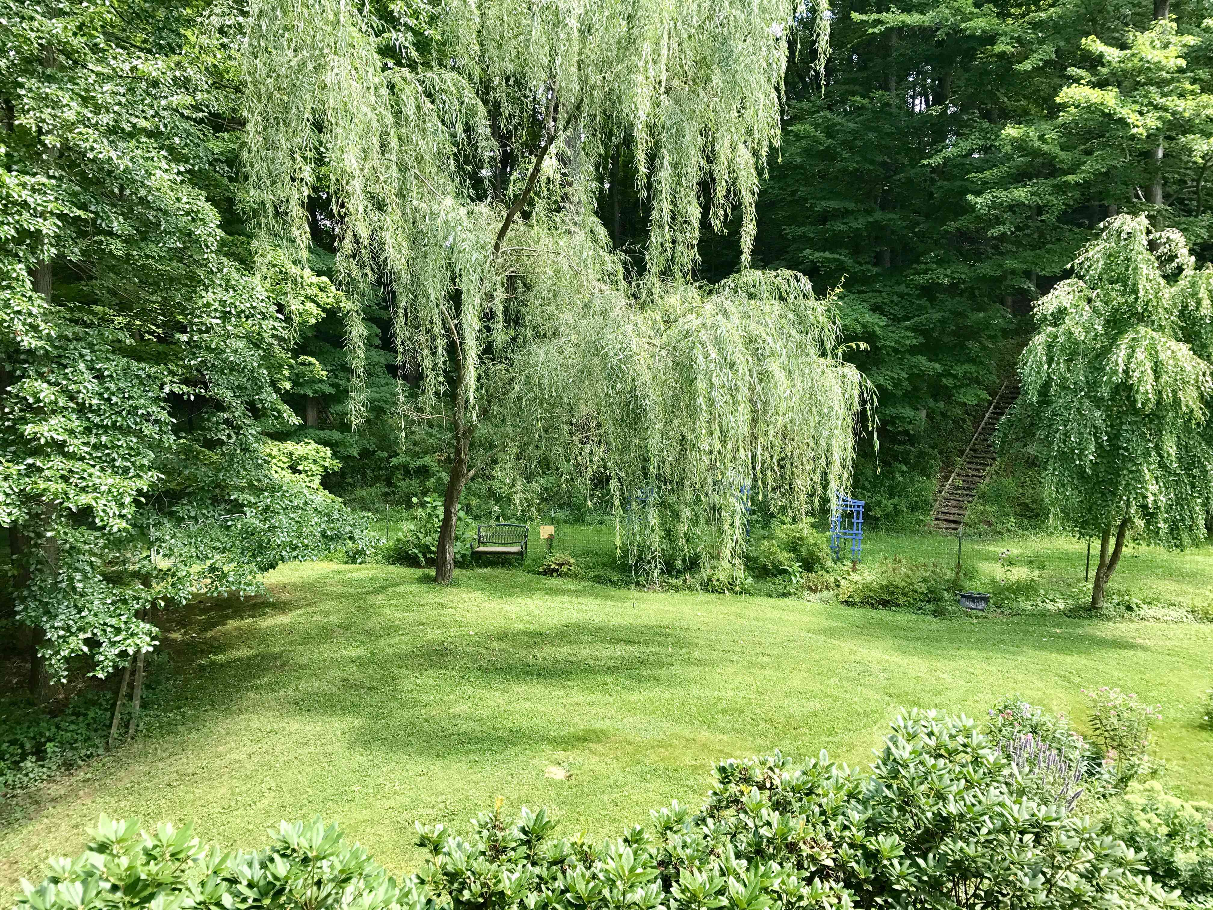 The author's backyard oasis has helped his blood pressure go down.