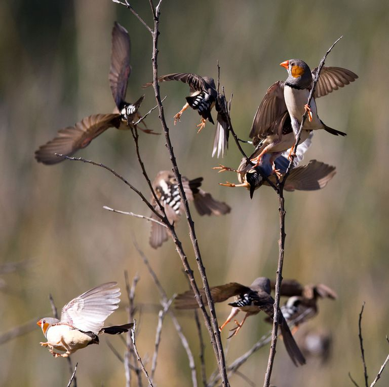 Birds gathering on branches