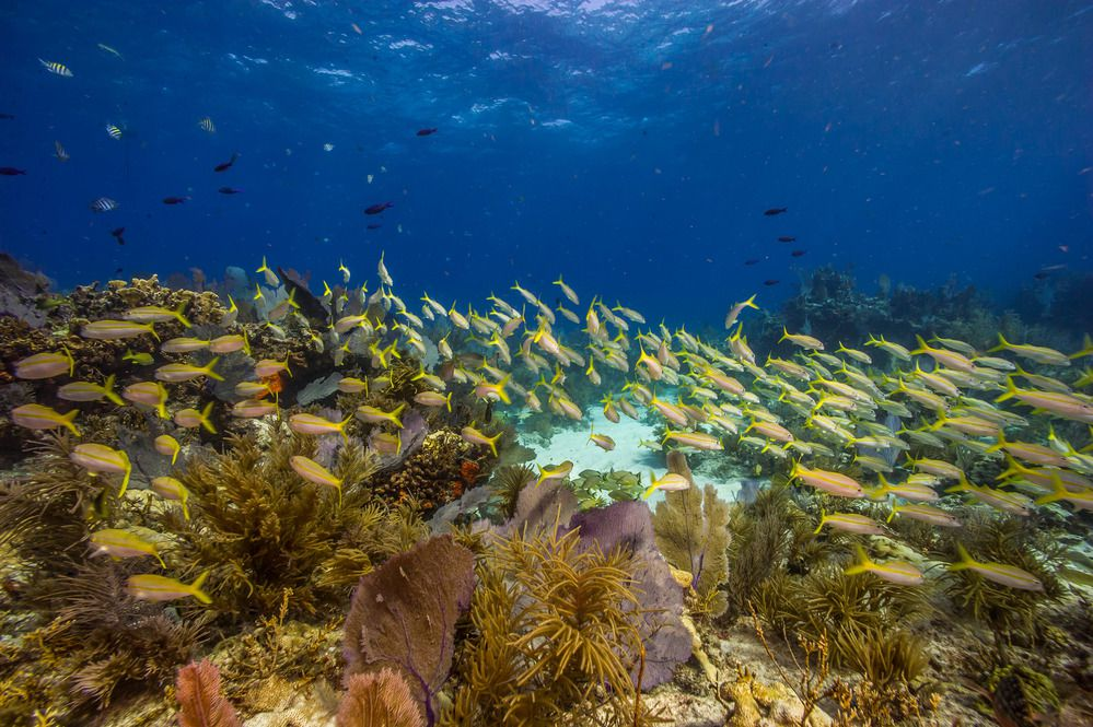 Biscayne coral reefs