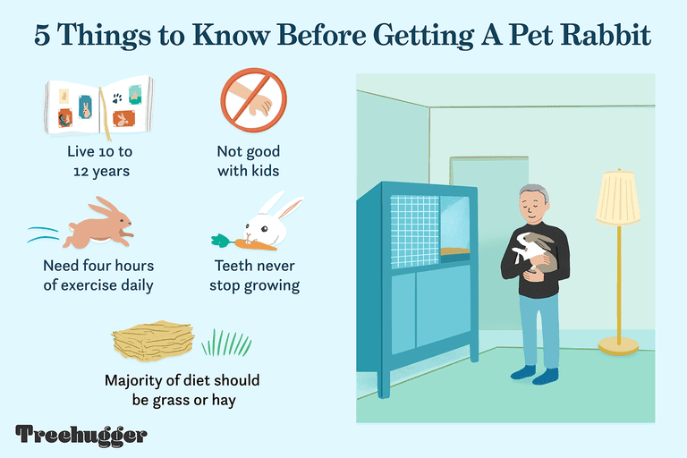 things to know before getting a pet rabbit