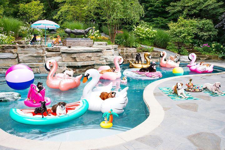 Los perros de refugio realmente saben cómo hacer una fiesta (en la piscina)