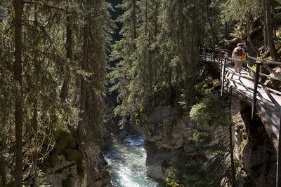 Canadian forest with pedestrian bridge