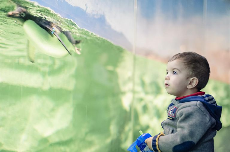kid looking funny penguin in Zoo