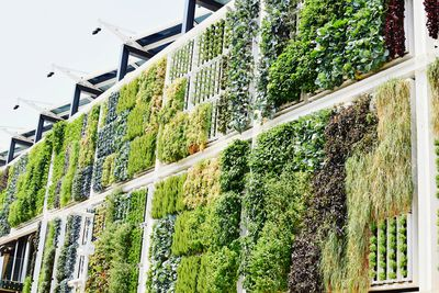 A living wall growing on the side of a building.
