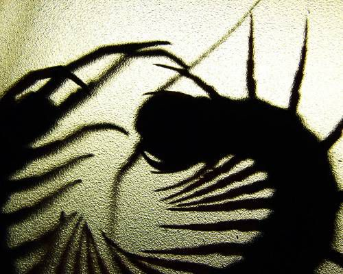The shadow of a bug on the wall