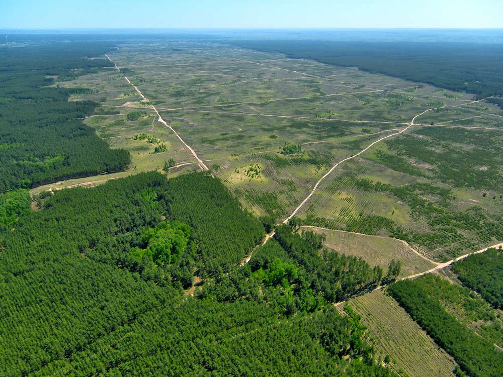 Aerial view of deforestation
