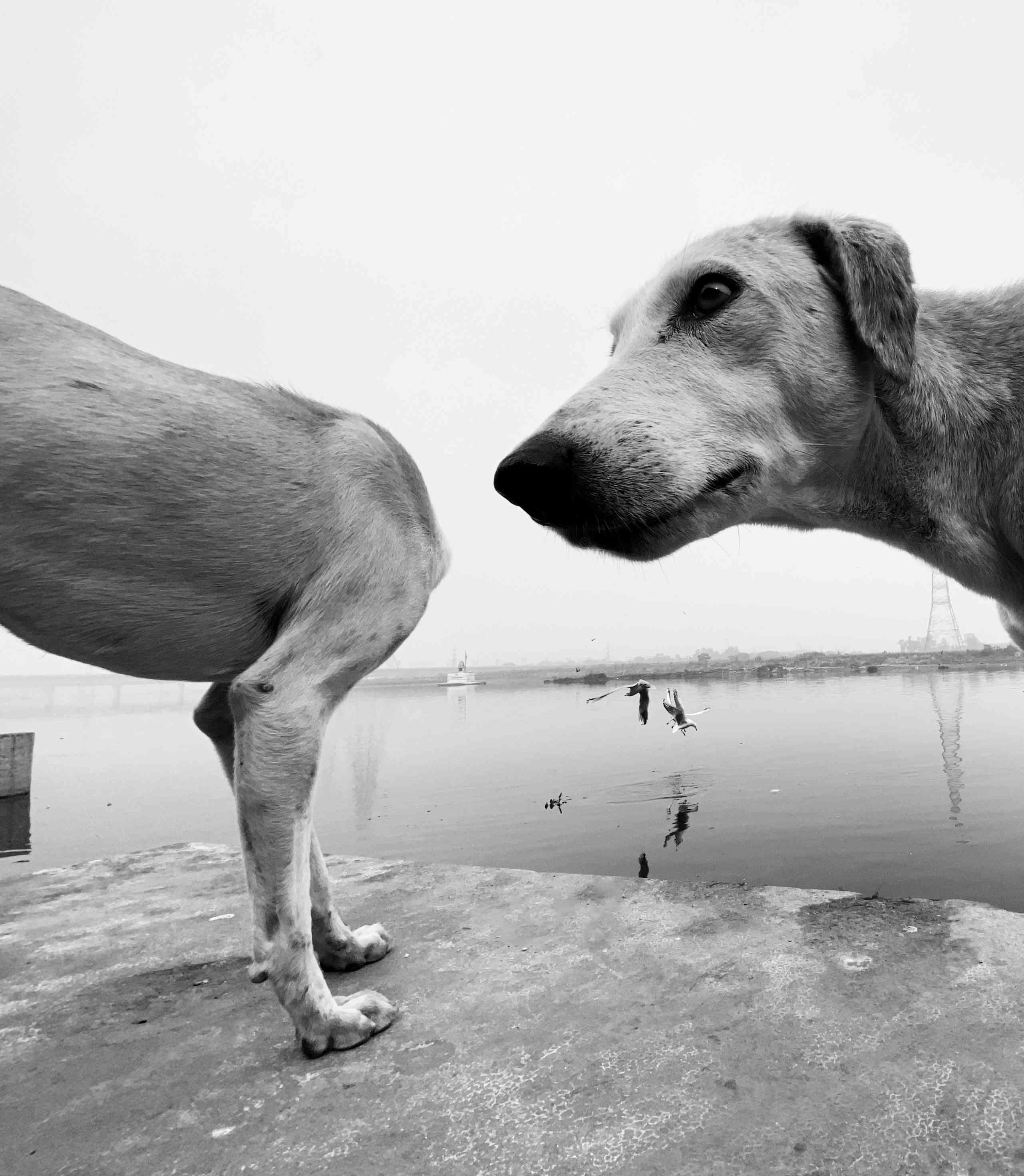 dog sniffing another dog's head