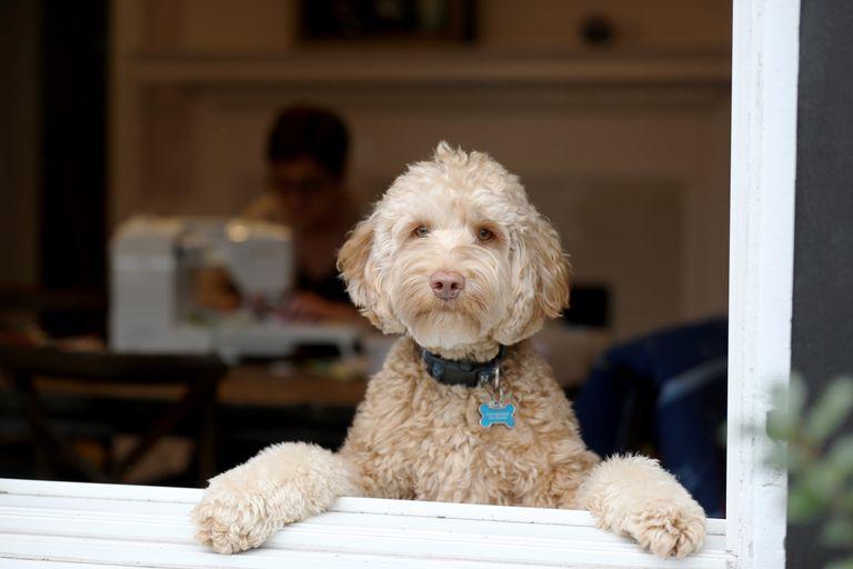 6 preguntas que hacen los dueños de mascotas durante la pandemia de COVID-19