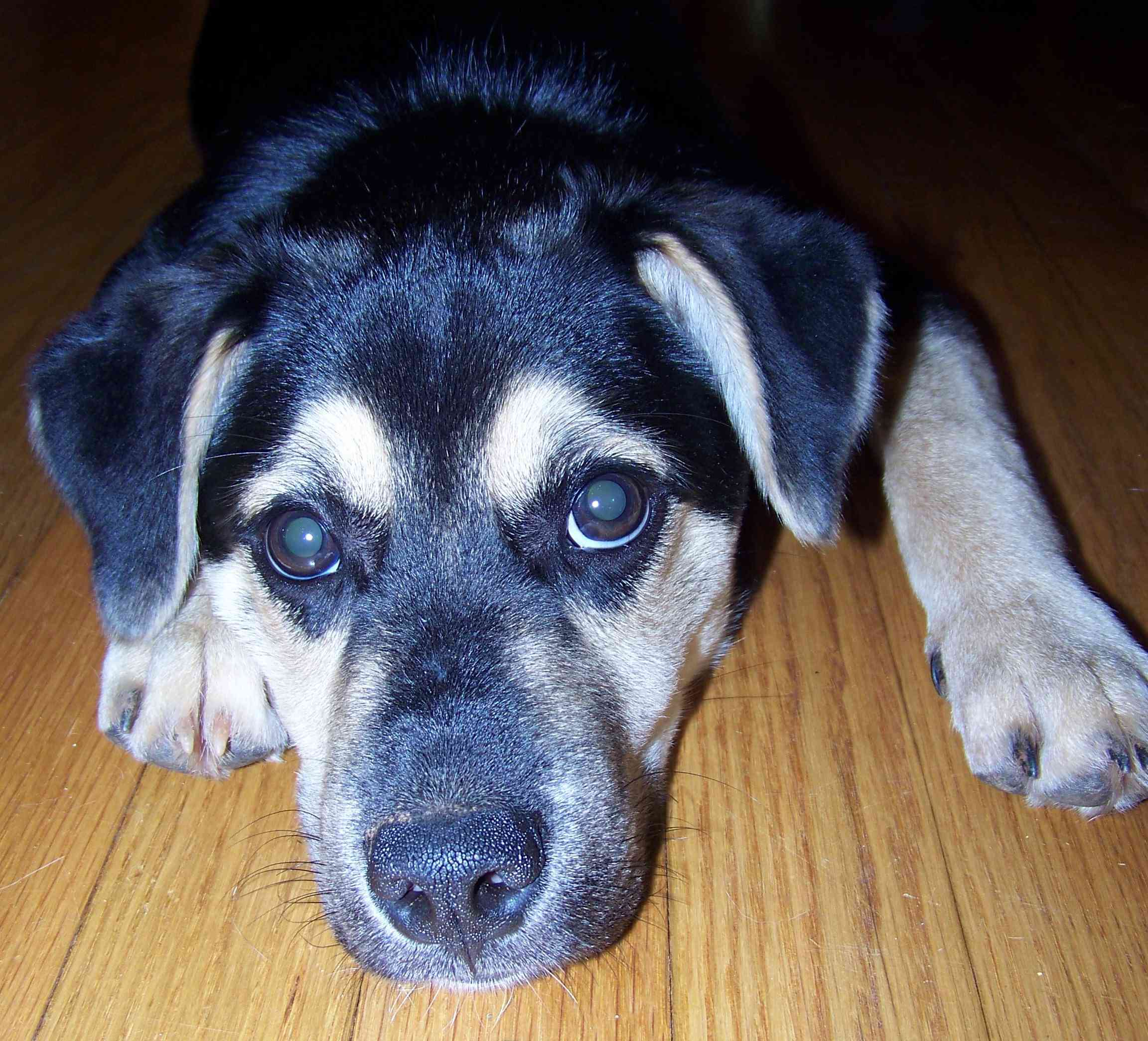 Otis, a mixed-breed rescue dog, as a puppy