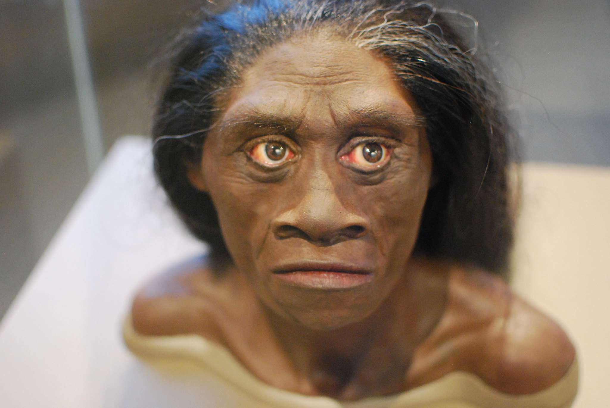 bust of hobbit with dark skin, flat nose, large eyes