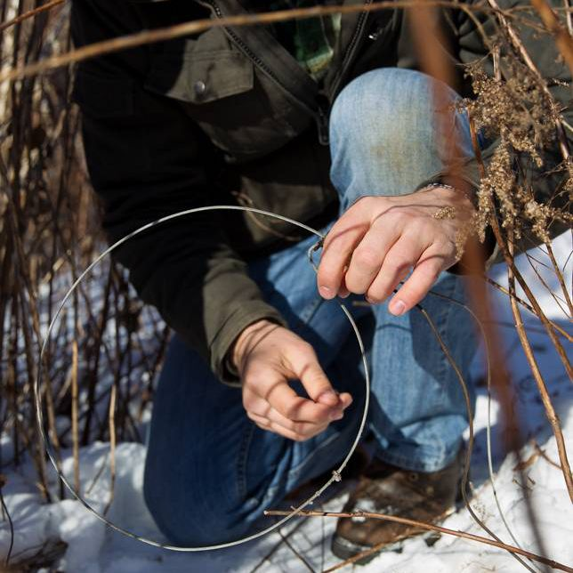 setting a cable restraint trap on an animal trail