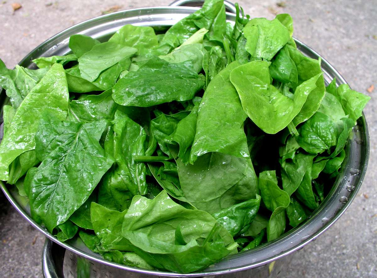 stainless steel bowl filled with freshly washed spinach