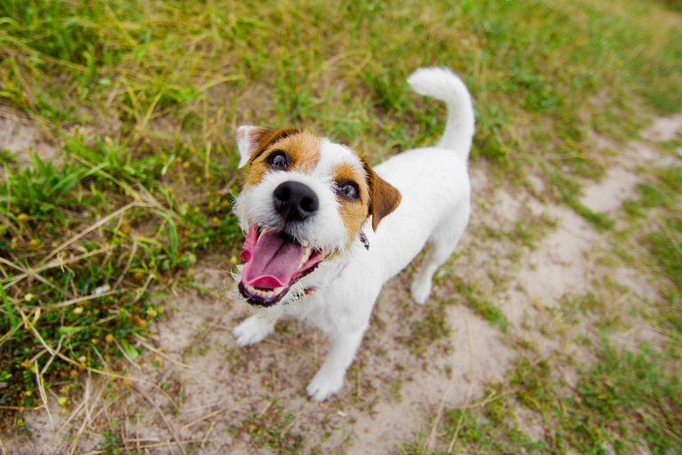 Sonidos de perros y su significado