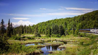 Alaska Railroad train traveling through green forests en route to Denali National Park