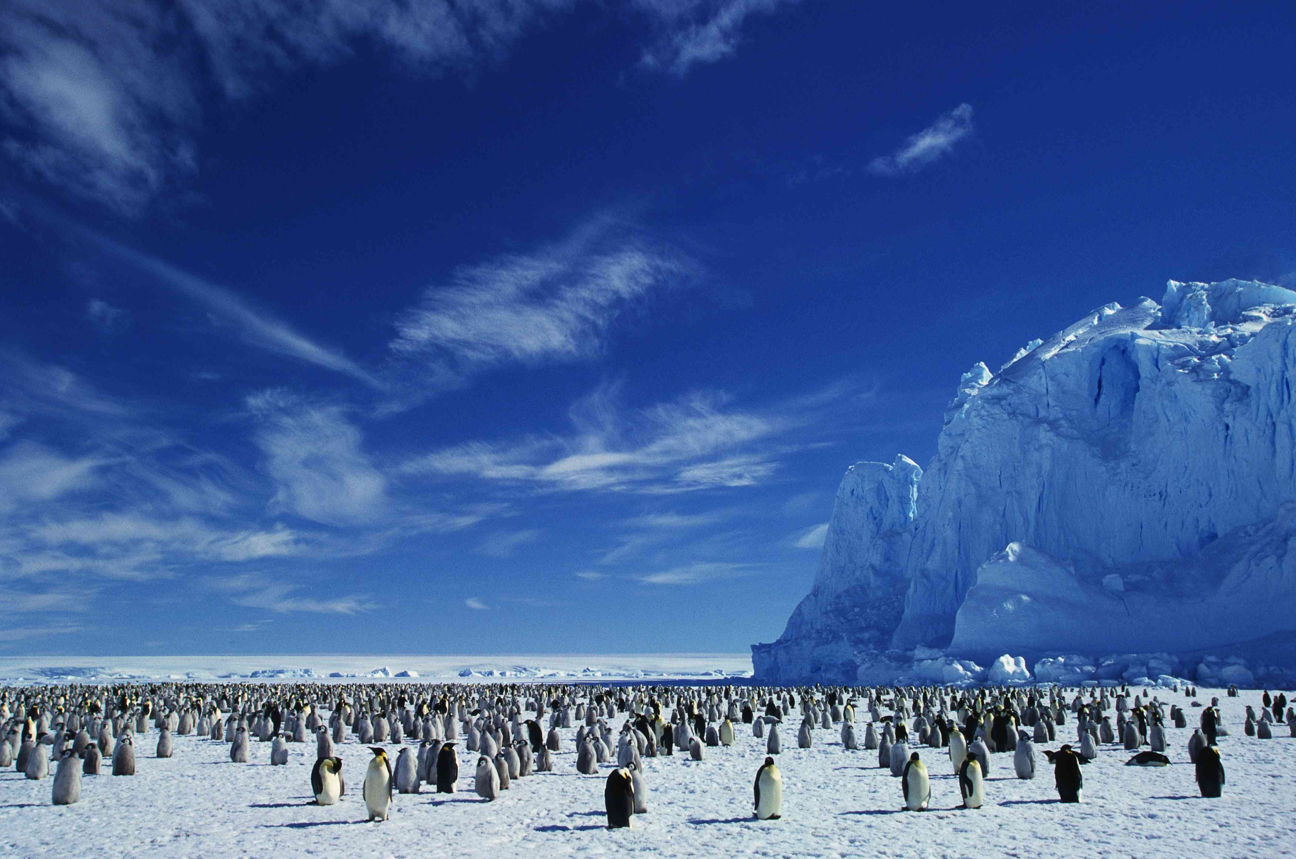 A colony of emperor penguins on an ice sheet in Antarctica