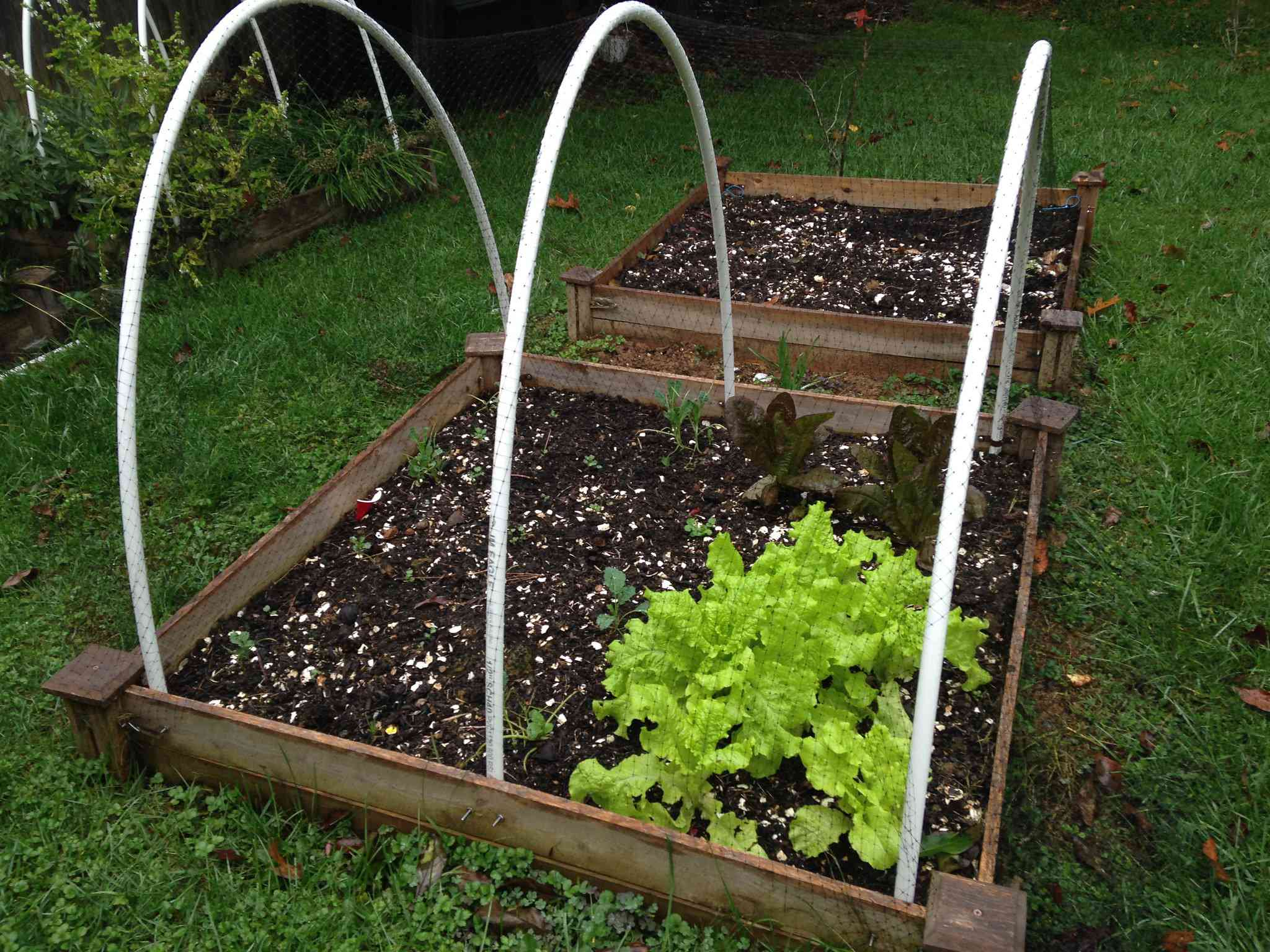 A square gardening box with three hoops for a low tunnel garden.