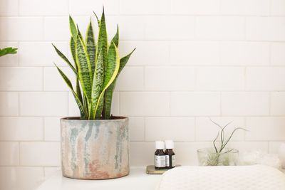 mother in law snake plant in planter near tub
