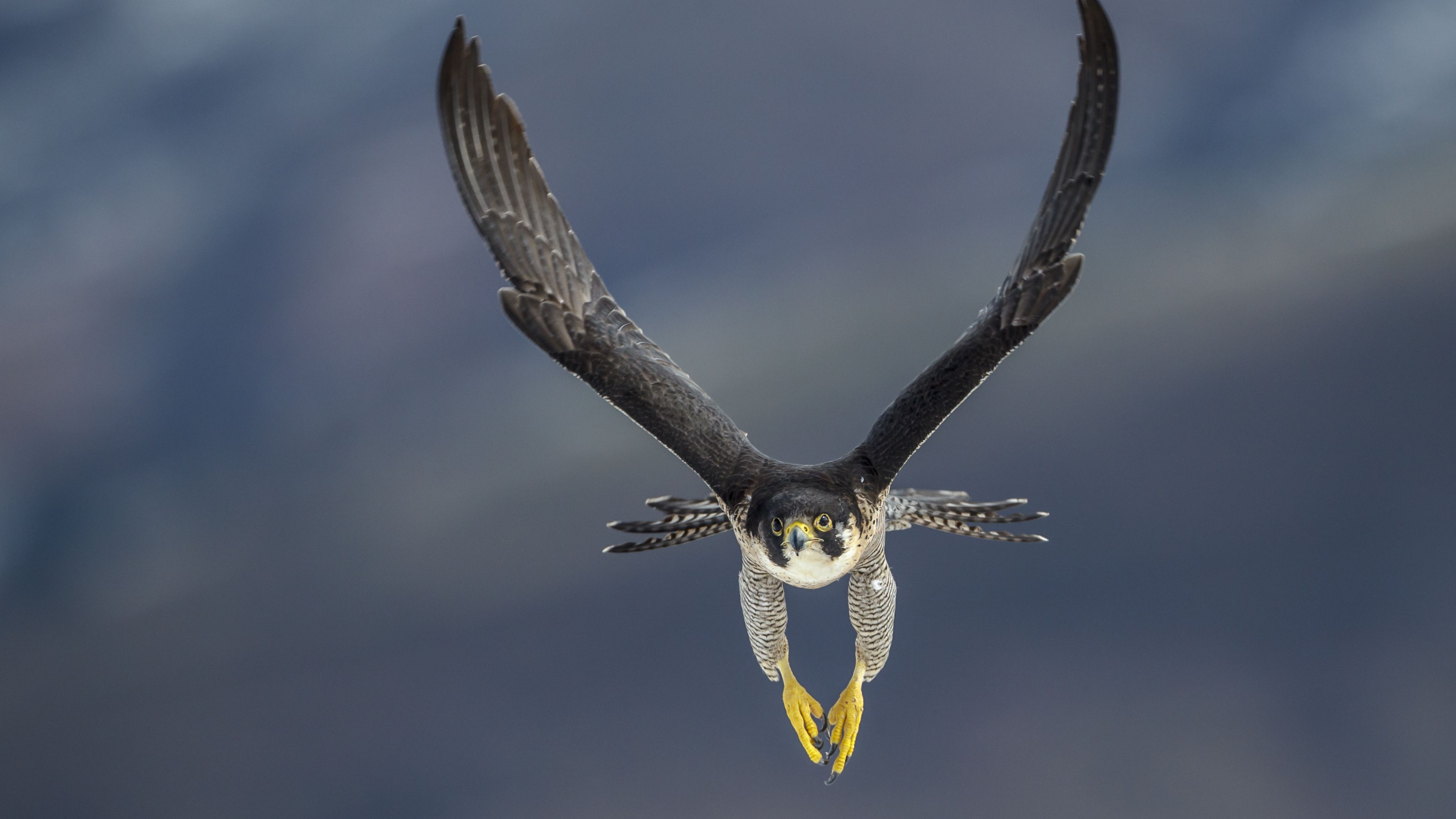 The Fastest Birds In The World