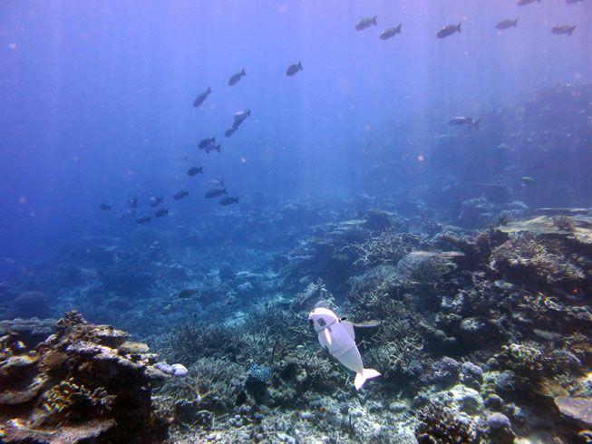 SoFi swims up toward a school of fish