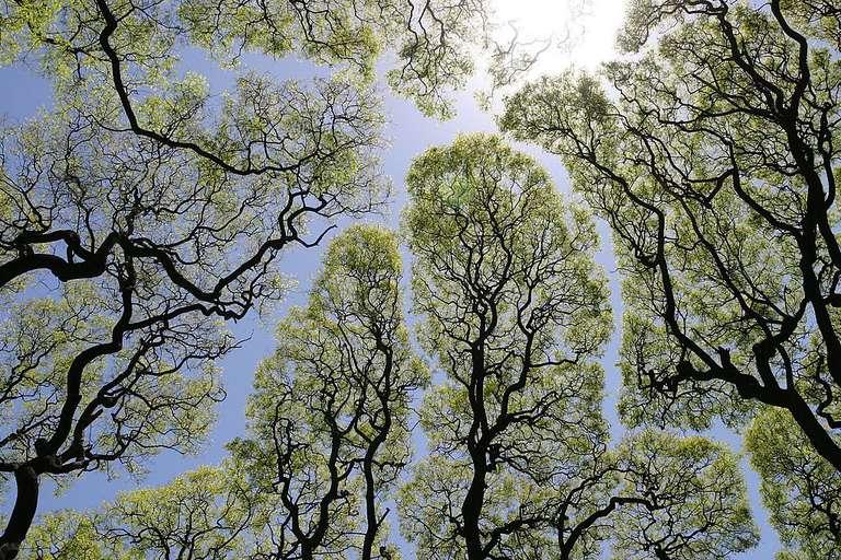 Sky through a conopy of trees