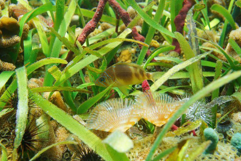 Como las abejas del mar, el plancton poliniza las plantas