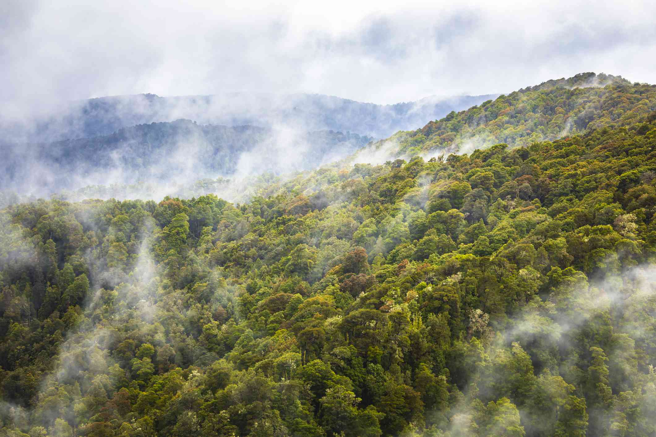 aerial view showing hills of multi-colored treetops and fog rising above