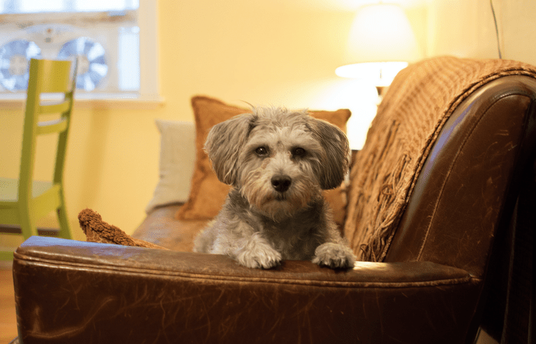 Don T Bother Trying To Rent At This Danish Apartment Complex Unless You Own A Dog