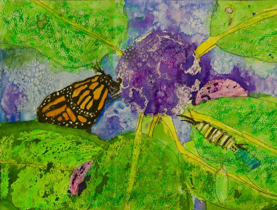A watercolor painting of Welsh's Milkweed and the Monarch butterflies who depend on it