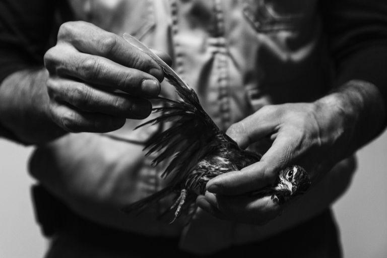 man's hands with bird