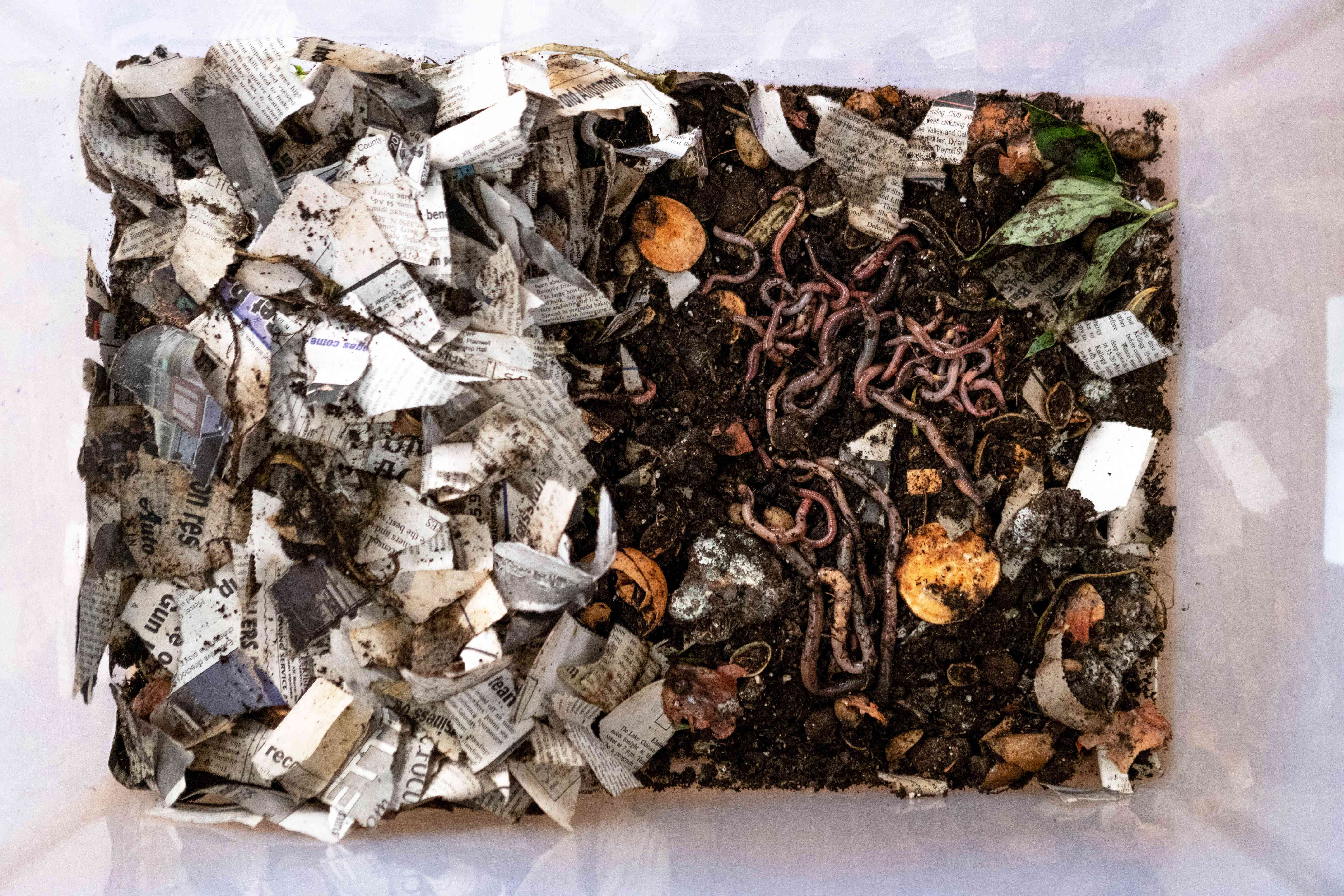 overhead view of vermicomposting with wet newspaper, worms, and food scraps