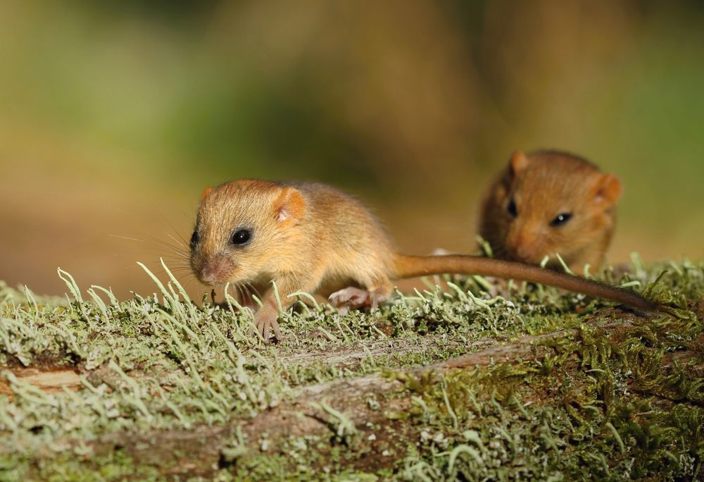 These little guys play follow the leader on a log.