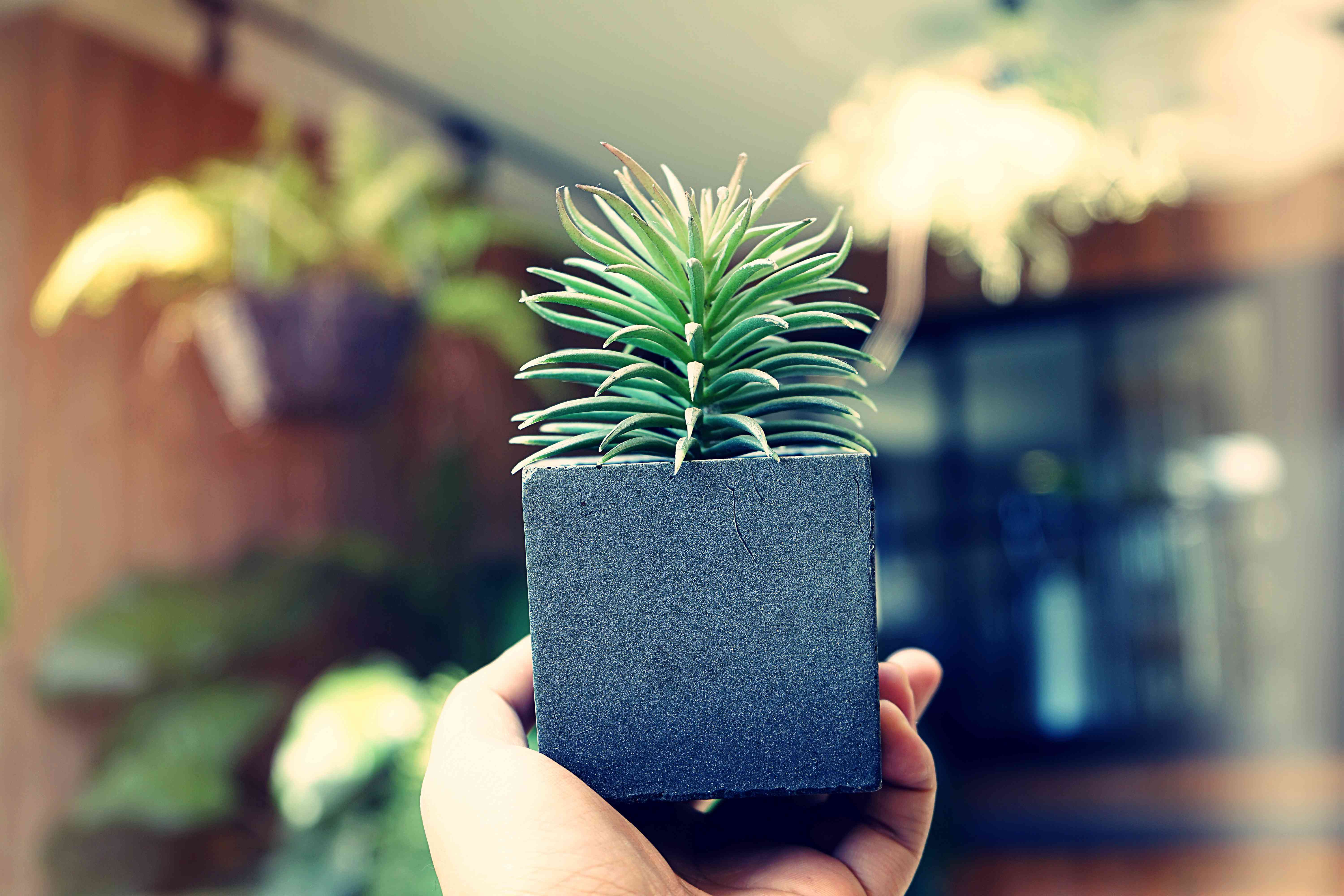 holding pot with a plant