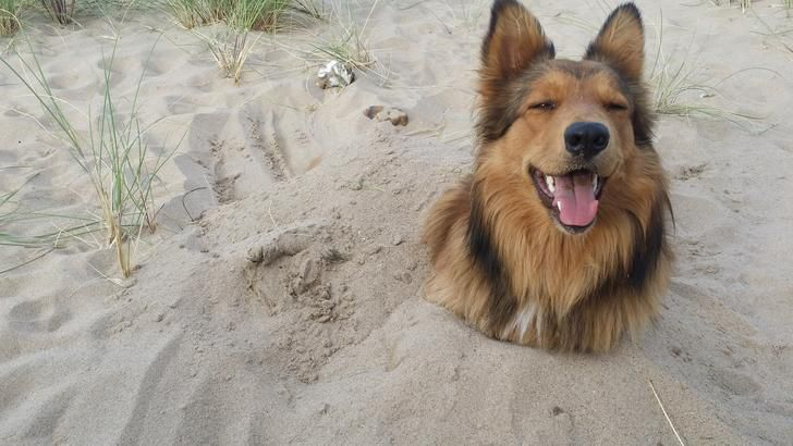 12 Dogs Having the Best Day at the Beach Ever