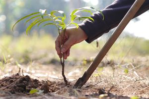 Cropped Image Of Hand Planting On Field