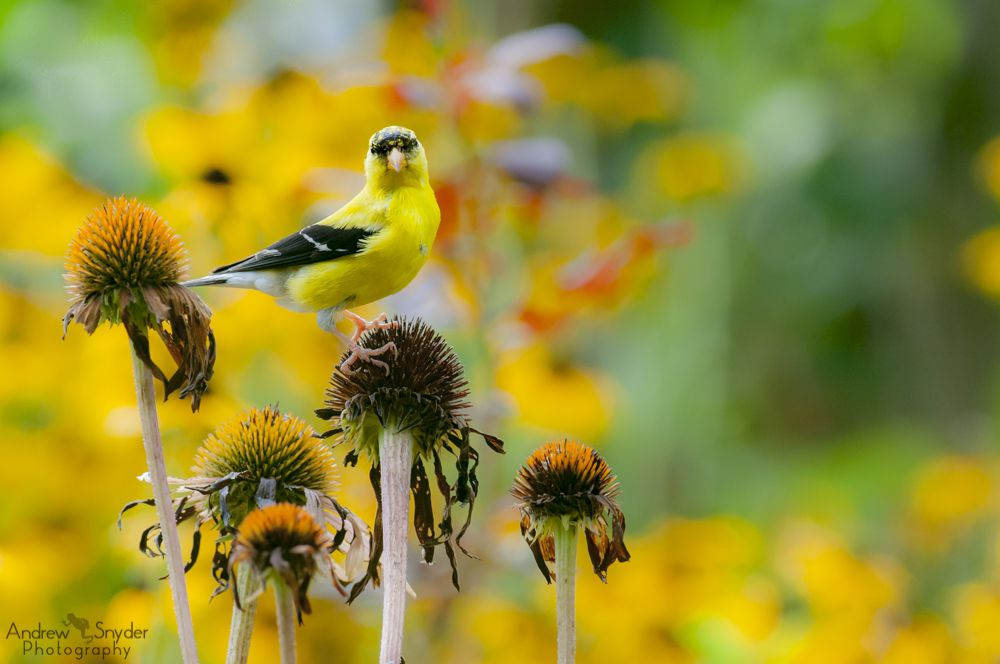 Why Planting a Garden Is Better for Bird-Watching Than Filling a Feeder