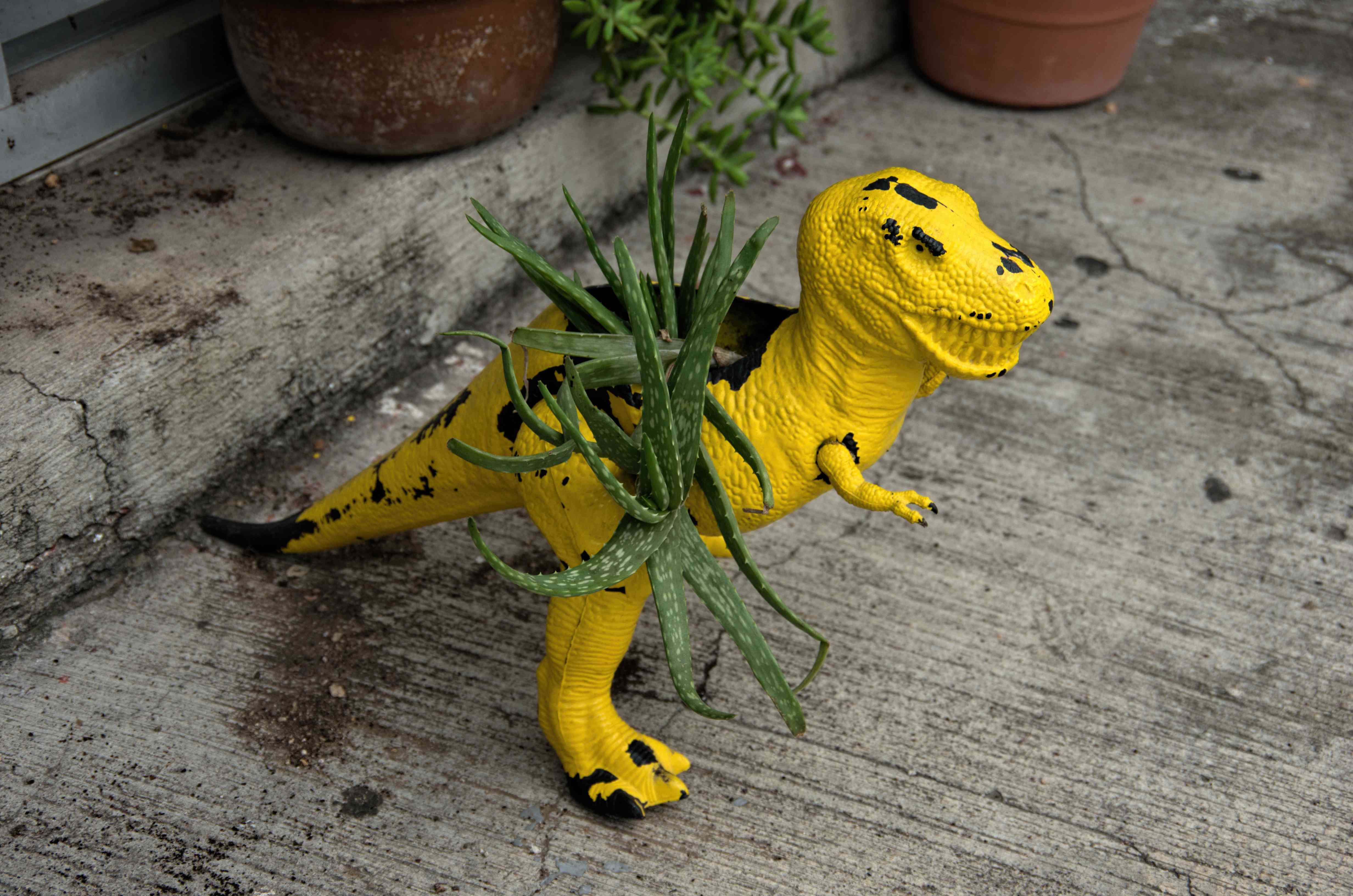 Aloe succulent plant in a pot made from an upcycled plastic dinosaur toy