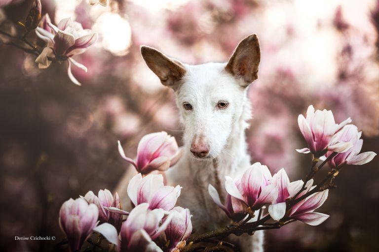 Fotógrafos capturan magníficas imágenes de amigos caninos en el concurso del Reino Unido