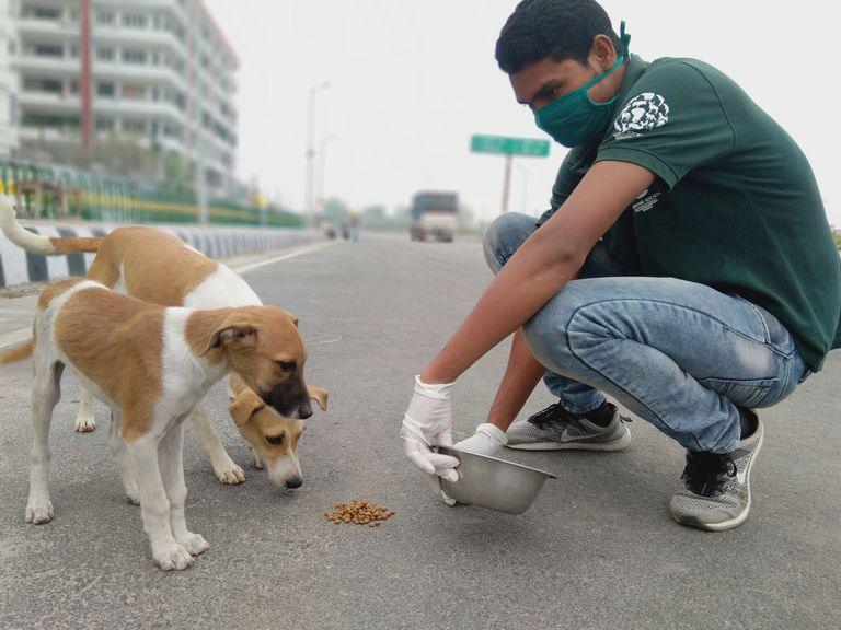 Feeding street dogs in India