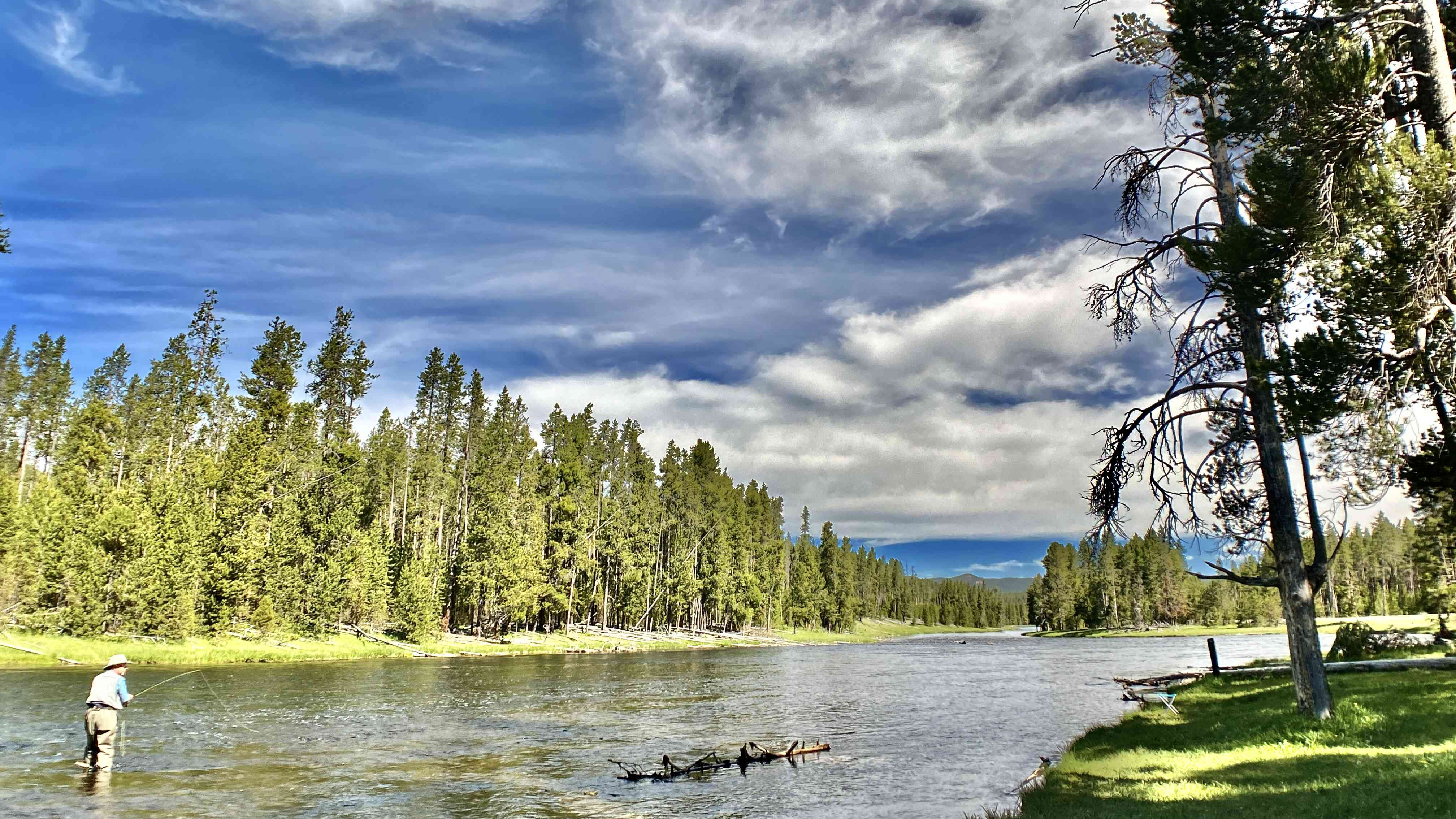Man fly fishing on the Yellowstone River with tall green trees on both sides of the river on a sunny days under a blue sky with white clouds